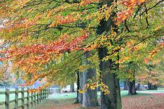 Quand l'automne adoucit les couleurs
