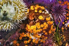 """""""In an Octopus's Garden Near a Cave"""" – Monterey Bay Aquarium, Monterey, California"""