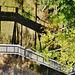 Auf dem Baumwipfelpfad - On a canopy pathway - HFF
