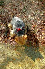 ... balade en automne ...