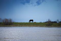 Das wilde Pferd in Jermakiw-Insel