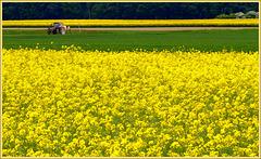 Hello......Yellow!!