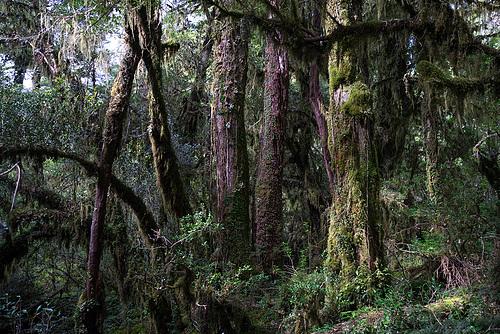 Bosque_Encantado