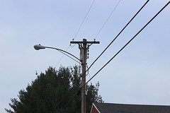 CL&P 4.8kV - Plymouth, CT