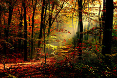 Verboden bos