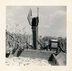 Harvesting Corn in the 1940s