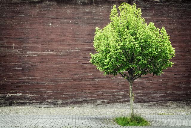Baum vor Braun