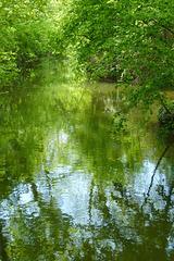 Paysage aquatique (5)
