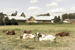farm environment (pip)