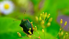 Beetle.....