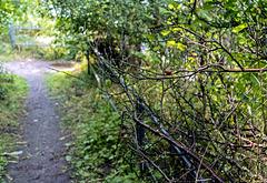 """Mit PiP: """"Wenn einer, der mit Mühe kaum, geklettert ist auf einen Baum ..."""