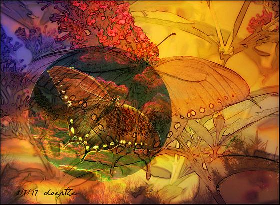 A butterfly's world