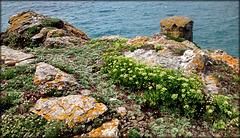 Tubby's Head - granite, lichen and rock samphire