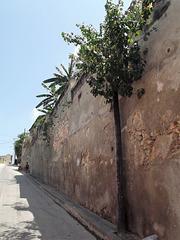 Façade botanique / fachada botanica