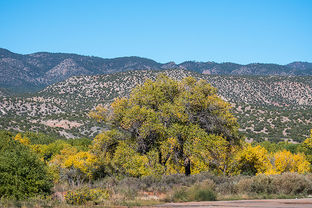 New Mexico landscape58