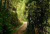 Baimashan : Promenade en forêt