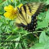 .. about butterflies