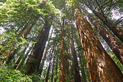 USA - California, Muir Woods