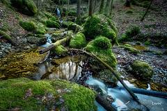Grüne Wildschlucht ++ green wild canyon