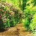 Rhodo - path