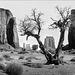dead juniper view - 1986