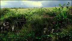 Cornish hedge (seen better days)