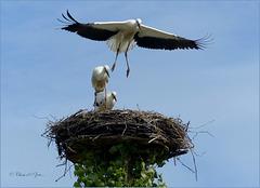 Series of Storks, III