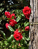 era maggio, il mese delle rose