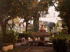 Fountain and orange trees.