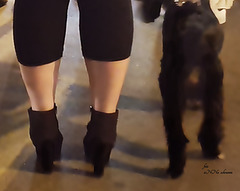 O black legs
