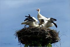 Series of Storks, II