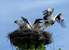 Series of Storks, I
