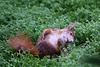 Eichhörnchen im Wintergarten V (Wilhelma)
