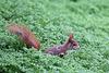 Eichhörnchen im Wintergarten IV (Wilhelma)
