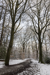 Ecclesall Woods in the snow 1