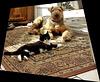 Comme chien et chat ♥♥ [ON EXPLORE]