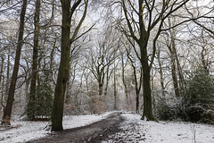 Ecclesall Woods in the snow 2