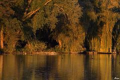 Grand Canal formé par la rivière Nonette