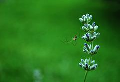 The Itsy Bitsy Spider...