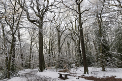 Ecclesall Woods in the snow 3
