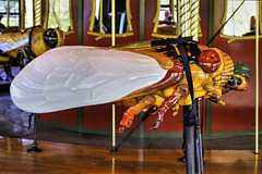 Cicada – Bug Carousel, Bronx Zoo, New York City, New York