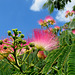BON DIMANCHE / HAPPY SUNDAY !!!!