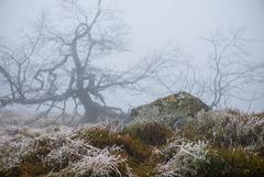 Frost und Nebel -  20160101