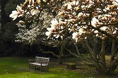 Les Magnolias du Bois des Moutiers