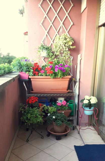 Il mio piccolo giardino da amare al tempo della solitudine del corona virus!