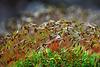 Zeit der Moose - Time of mosses