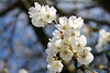 the spring / le printemps