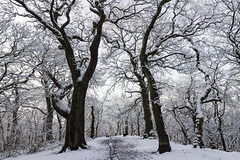 Ecclesall Woods summit in the snow 1