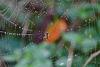 Herbsttau - Autumn Dew