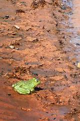 Jump, Hesitating Frog!